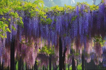 Цветочный парк Асикаго в Японии