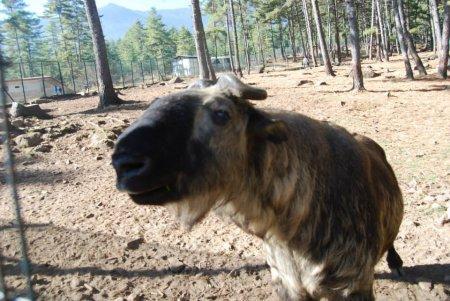 Загадочный горный Бутан