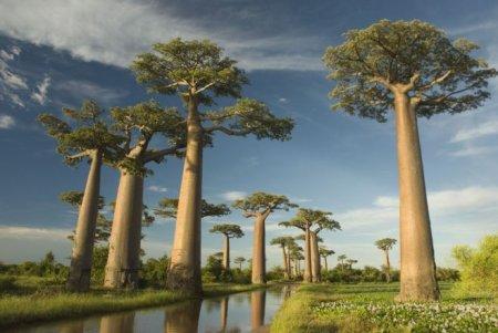 Чудо-остров Мадагаскар