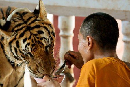 Тайский монастырь тигров
