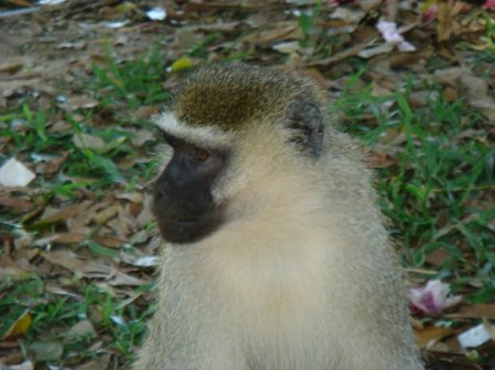 Уганда. Поездка к Знаку экватора