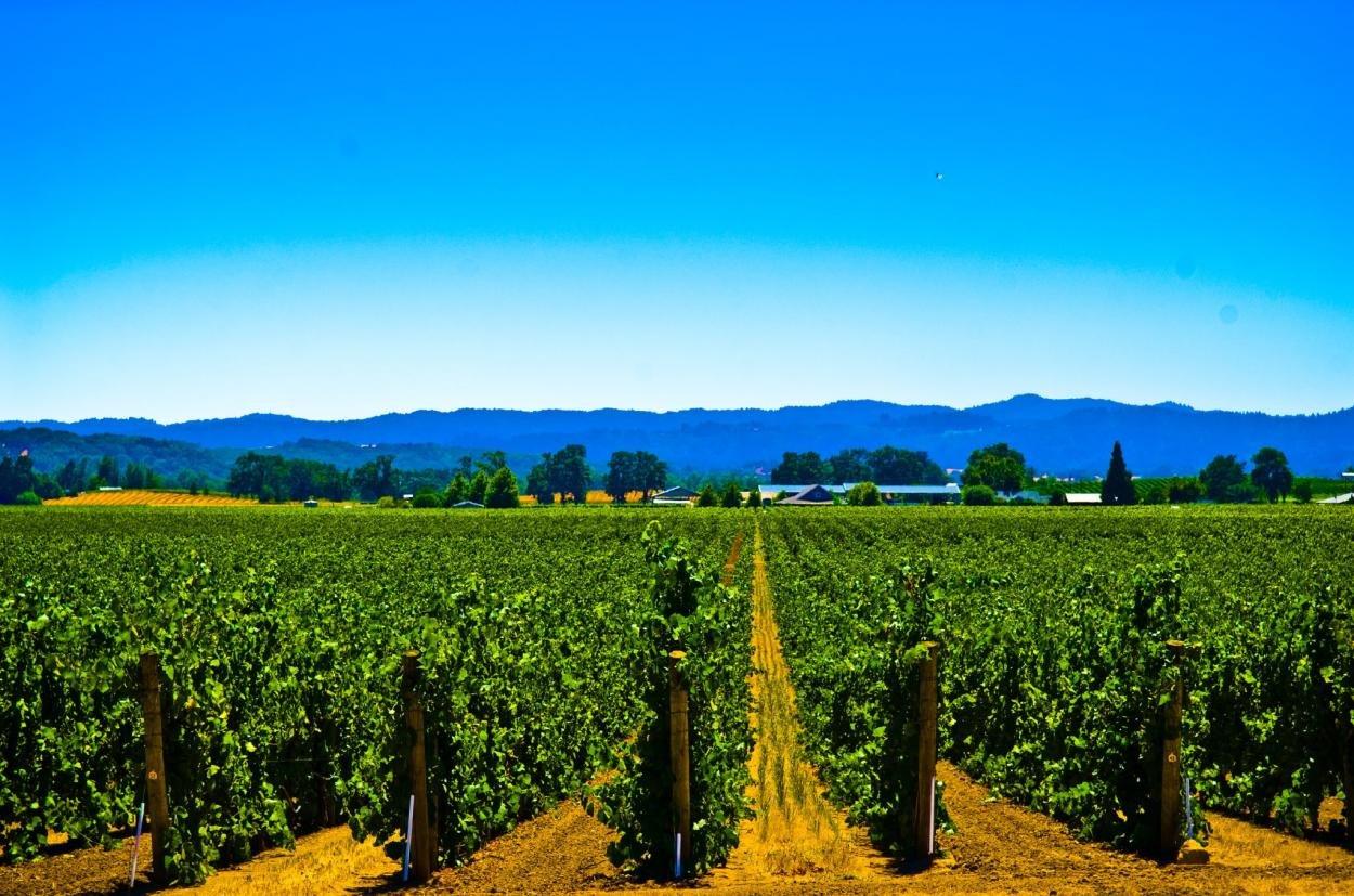 виноградники в мире фото