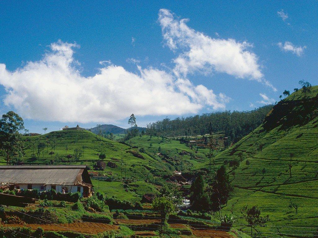 Особенности жизни на Цейлоне