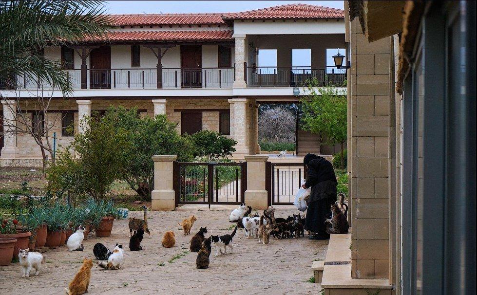 Кошачий монастырь на Кипре
