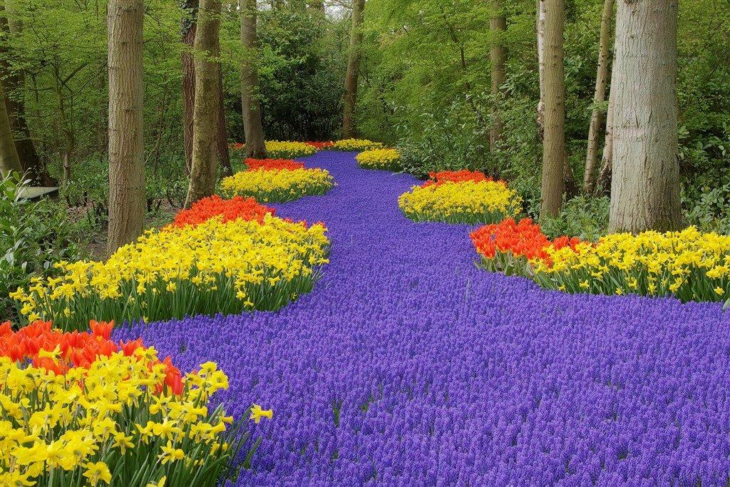 Кёкенхоф — самый грандиозный цветочный парк в мире