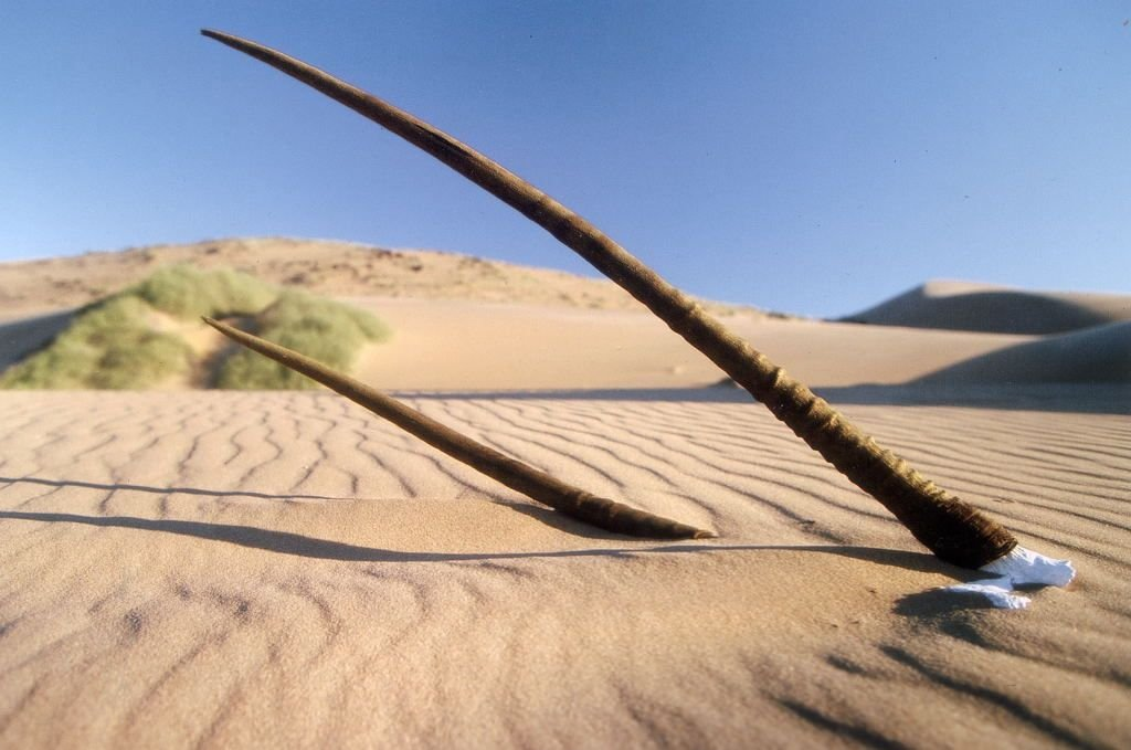 Берег скелетов в Намибии