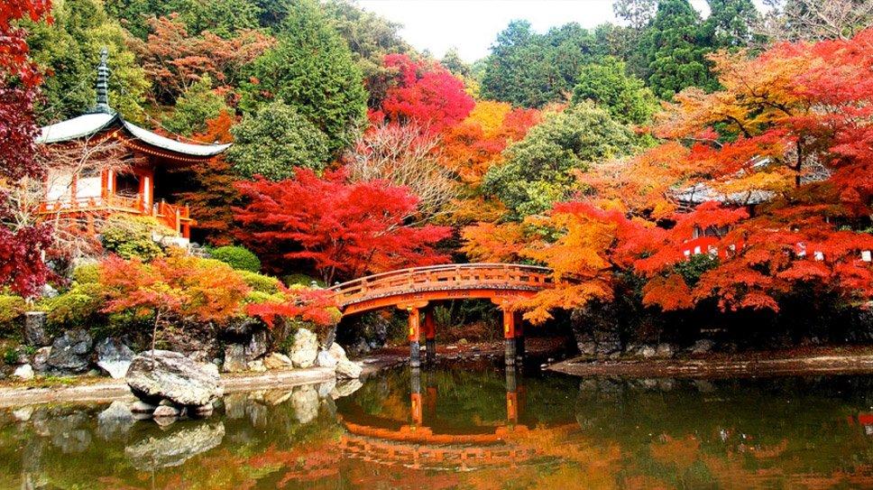 Любование осенними кленами в Японии