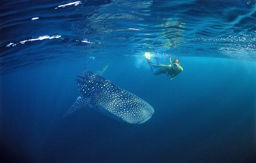 Карибское сафари — свидание с акулой
