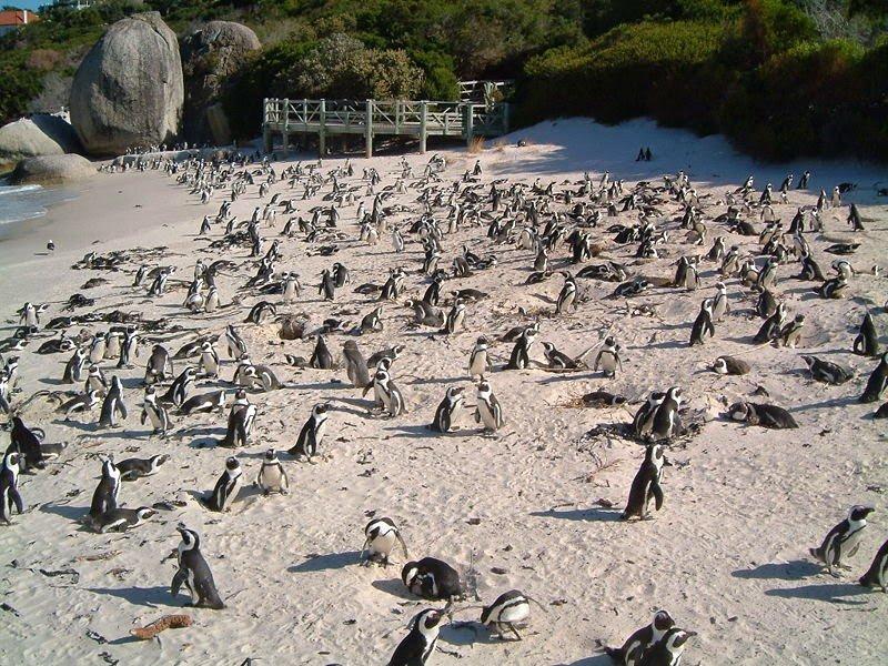 Остров Ичабо – в гости к пингвинам