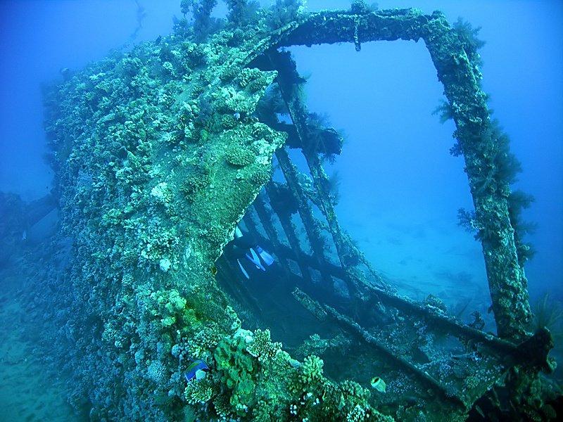 Сокровища подводного мира – легенды дайверов