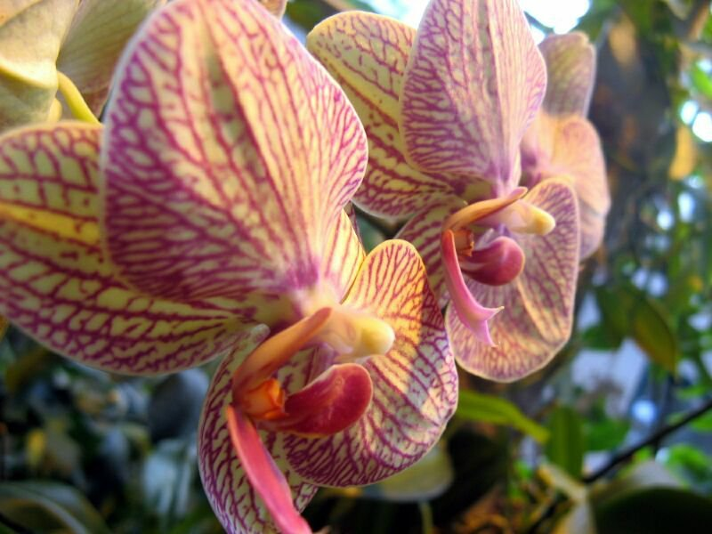 На Тайване готовятся к Международной выставке орхидей
