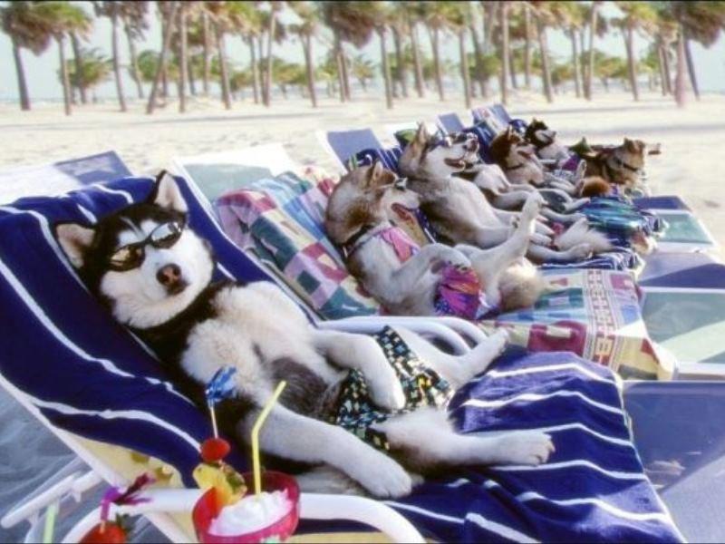 В Барселоне возводят собачий пляж