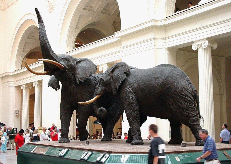 В Московском зоопарке открыт Музей слонов