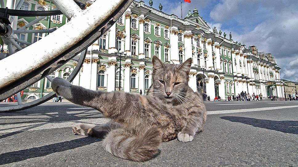 Коты Эрмитажа признаны самой необычной достопримечательностью в мире